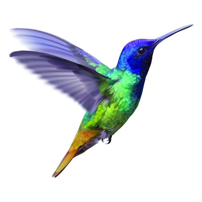 Colorful, flying hummingbird graphic
