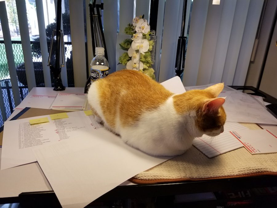 Photo of a cat sitting on top of papers, distracting from the work that needs to be done